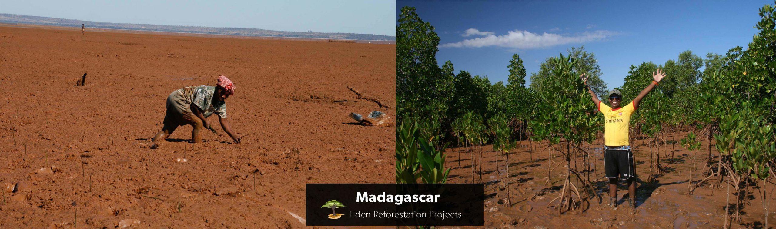 Aufforstungsprojekt Mangroven Madagaskar